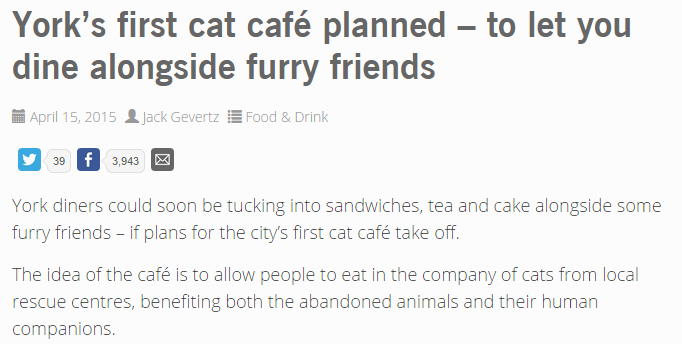 catcafe_article